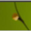 terminal-desktop