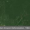 google maps rainforest