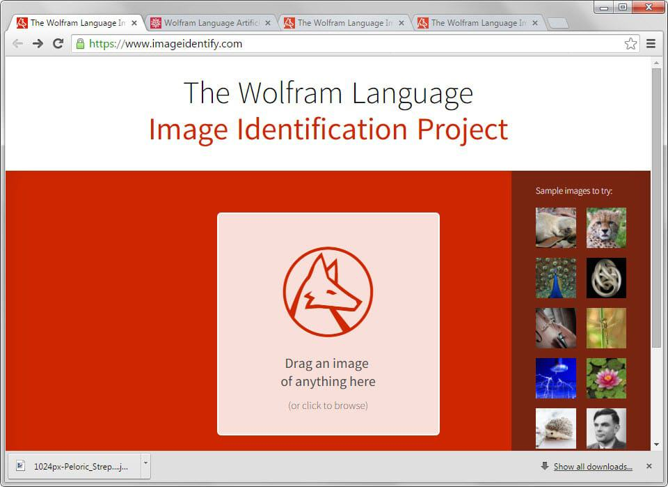 image identification project